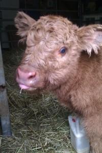 milkmad baby